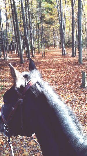 Autumn 🍁🍂🍃 Besthorse Forest Goldpolishautumn Equestrian First Eyeem Photo