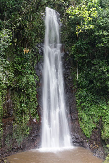 Waterfall Sao Nicolau, Sao Tome and Principe, Africa Africa Botanic Countryside Day Environment Florya Hiking Landscape Nature No People Outdoors Rainforest Sao Tome And Principe Scenery Scenics Tourism Tourist Attraction  Travel Travel Destinations Trekking Tropical Tropical Climate Tropics Waterfall West Africa
