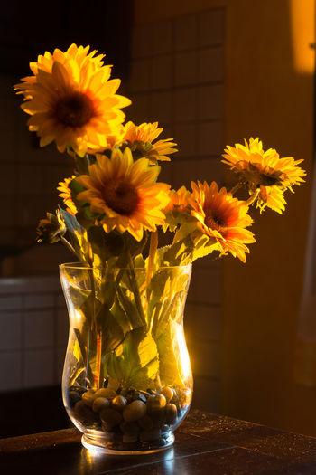 Sunflower az sunset I 2016 Italy Peter_lendvai Phototrip San_gervasio Sunflower Toscana Travel The Still Life Photographer - 2018 EyeEm Awards