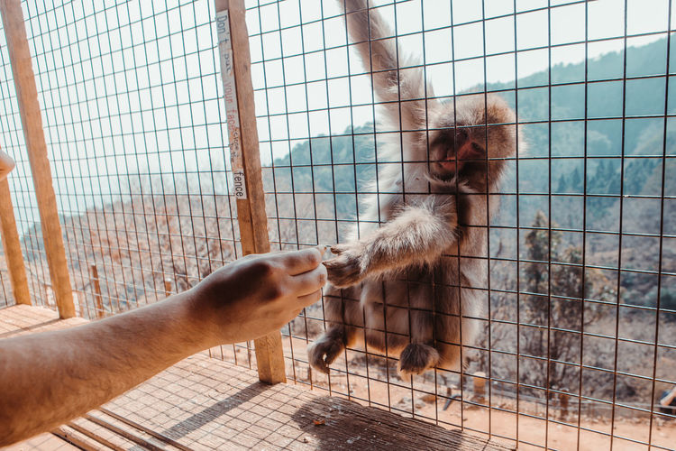 Cropped hand of man giving monkey food through fence
