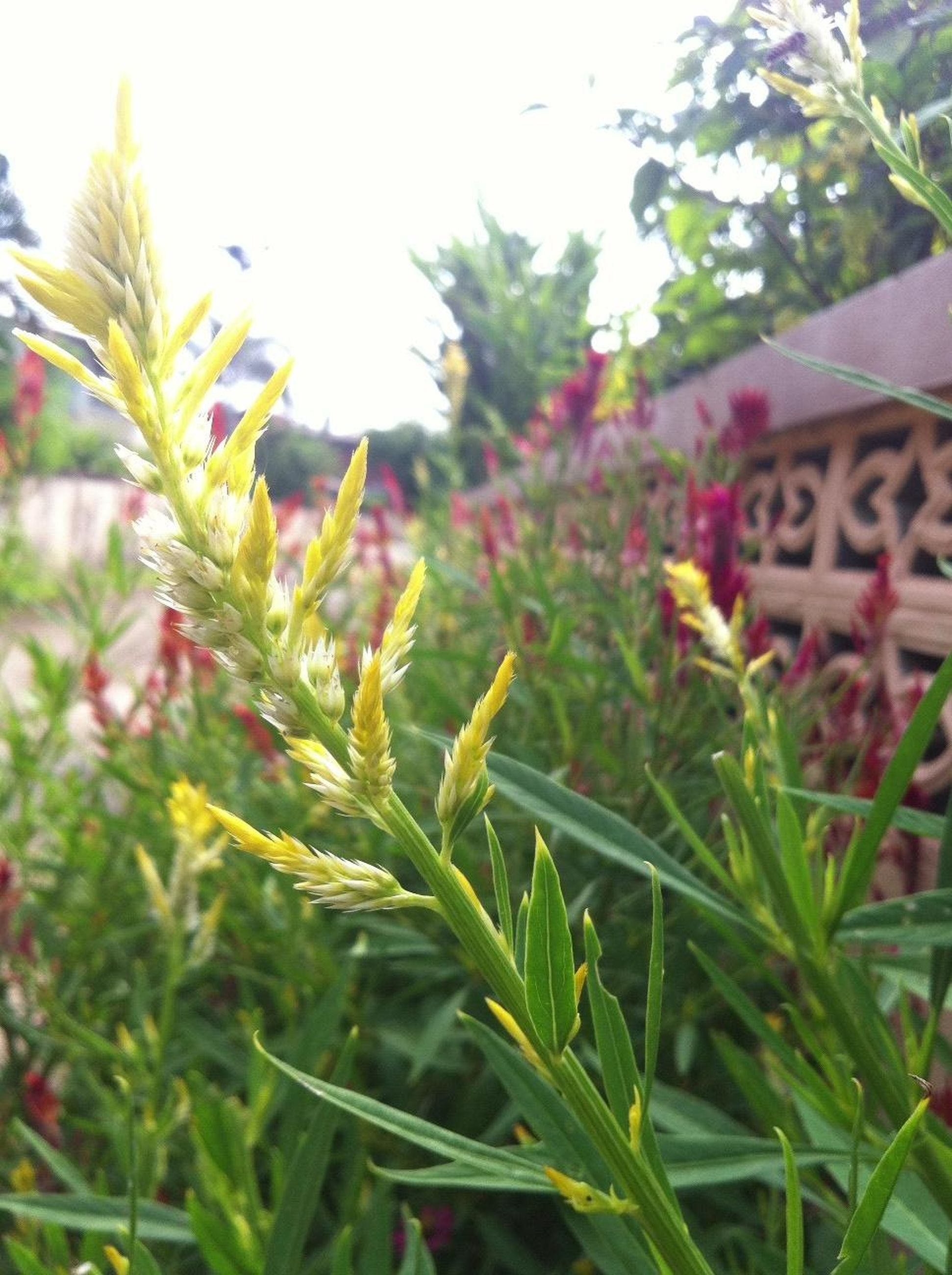 growth, plant, leaf, green color, focus on foreground, nature, close-up, freshness, building exterior, growing, selective focus, beauty in nature, built structure, field, stem, grass, day, outdoors, flower, architecture