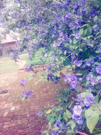 Purple Flower Pretty Nature Backyardphotography Garden Photography Inmygarden
