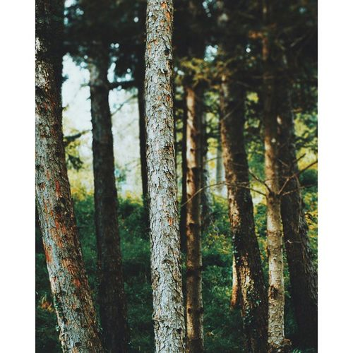 Wood ??