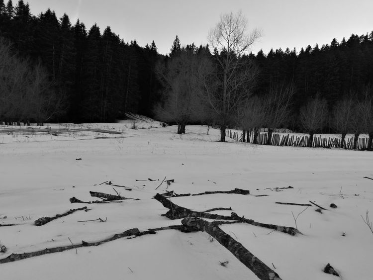 Tree Nature Cold Temperature Landscape Beauty In Nature Snow Winter No People Bird Outdoors Day Sky Blackandwhite Leica Lens Leicap9