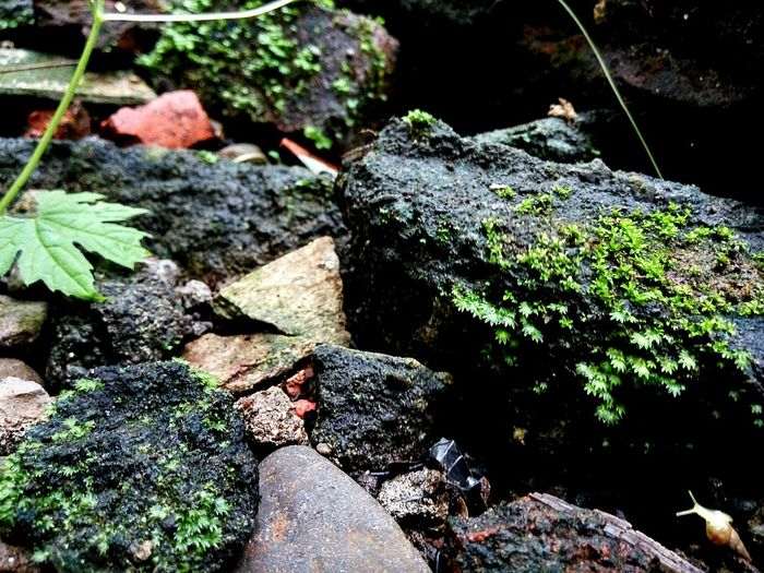 Mossy stone Taking Photos Hello World Enjoying Life Check This Out First Eyeem Photo