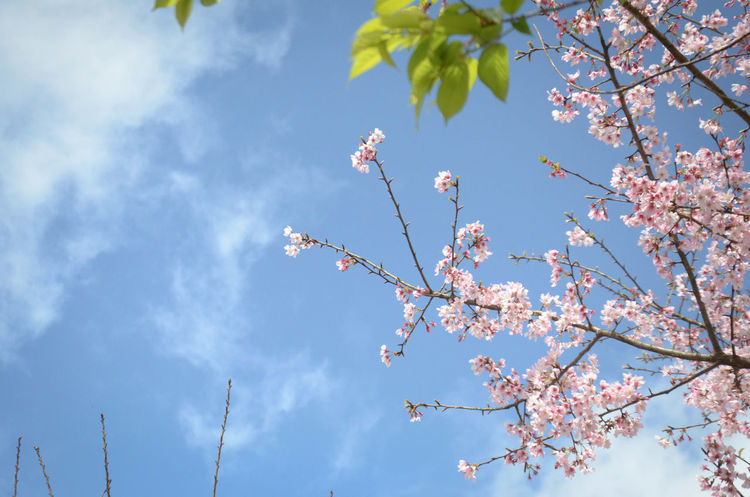 Trying to fly high! The beautiful flowers and new leaves. Flowers Enjoying Life Winze's Life Taipei