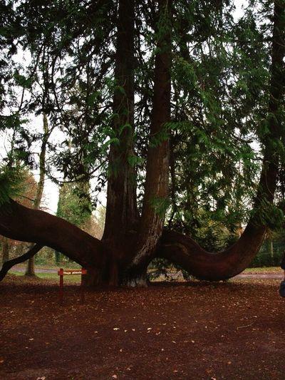 Hugging A Tree Ireland Blarney Castle Trees EyeEm Nature Lover Enjoying Life