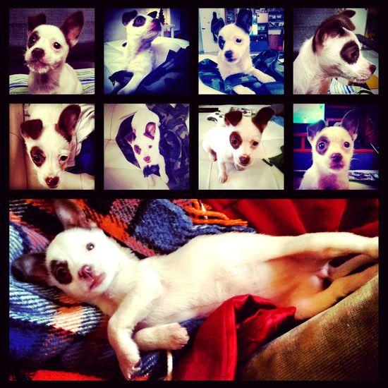 DogLove Dog Love Puppy Love Sally My Artwork Hello World