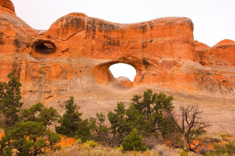 Trees against rock formations at arches national park