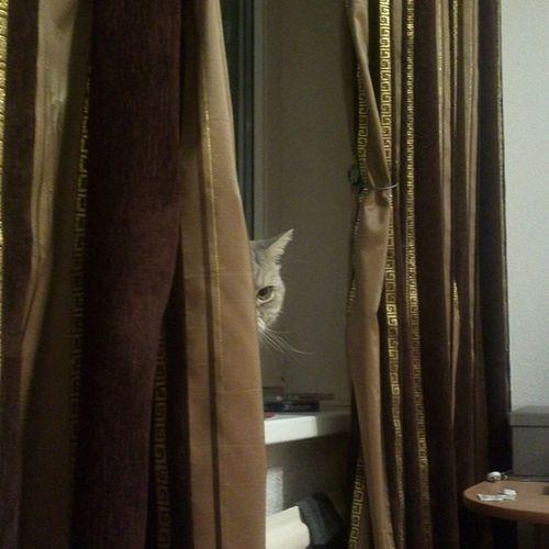 Soon Cat Spion