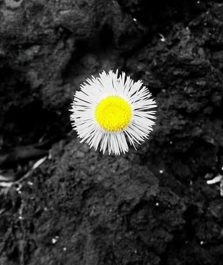 Flower First Eyeem Photo
