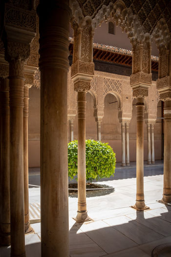 Alhambra (Granada) Alhambra De Granada  Granada, Spain The Week on EyeEm Alhambra Ancient Civilization Arcade Arch Architectural Column Architectural Feature Architecture Colonnade Corridor Courtyard  Day History No People Ornate Outdoors Sunlight The Past Tiled Floor Tourism Travel Travel Destinations