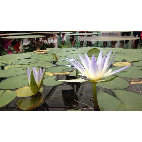 Botanical Gardens 🌷 First Eyeem Photo