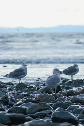 Seagulls perching on beach against sky