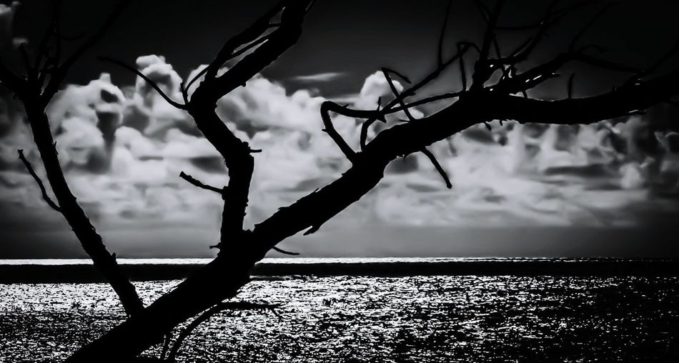 Black And White Black And White Photography Black And White Collection  Black And White Tree Scenery Ocean View Scenic View Smoky Cloud Kauai♡ Hawaii Nature Ocean Nature_collection