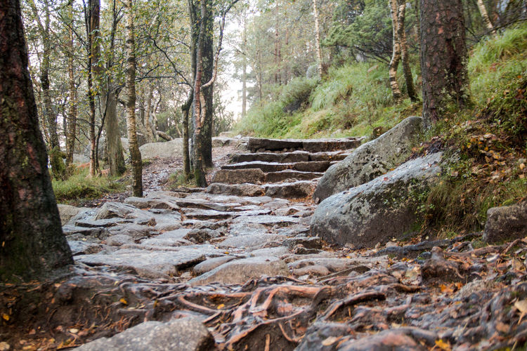 Day Forest Hiking Nature Nature_collection No People Outdoors Path Scenics Sky Stairs Tree Tree Trunk