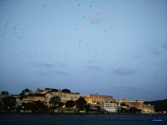 Lake View . Citypalace Palace. Evening Sky Watching Birds