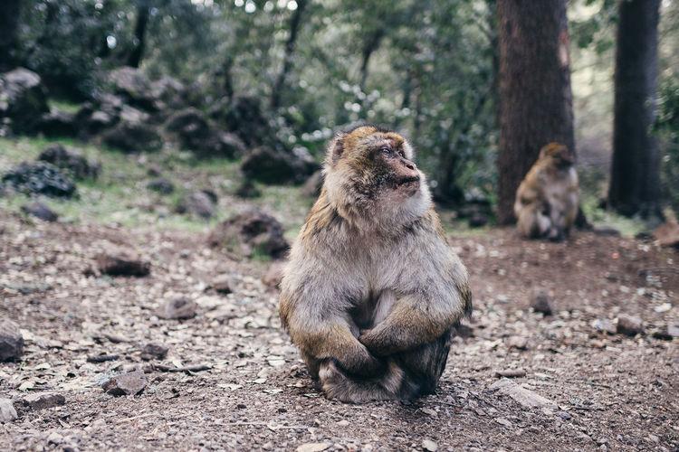 Monkey sitting on a field