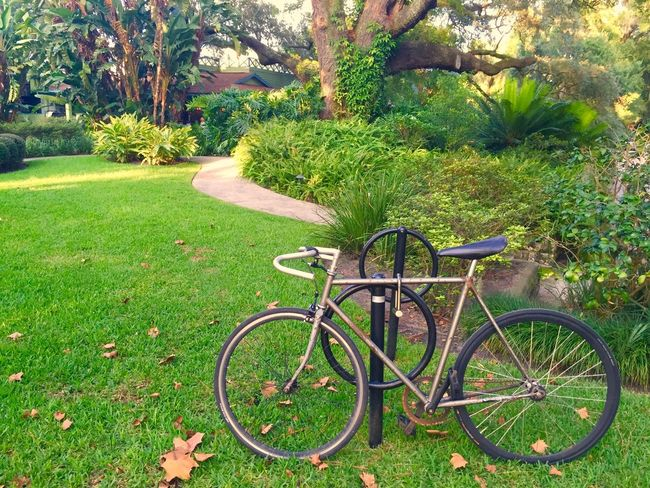 Grass Bicycle Green Color Tree Growth Field Day Outdoors Nature No People Transportation Stationary Tranquility Land Vehicle Plant Landscape Beauty In Nature Bicycle Rack