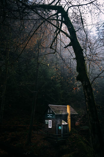 Cabin in the woods Tree Plant Forest Trunk Tree Trunk Nature No People Branch Architecture Land Built Structure Bare Tree Night Outdoors Dusk Tranquility Building Exterior WoodLand Wood - Material Wilderness In The Forest Cabin Cabin In The Woods Forest Photography Travel