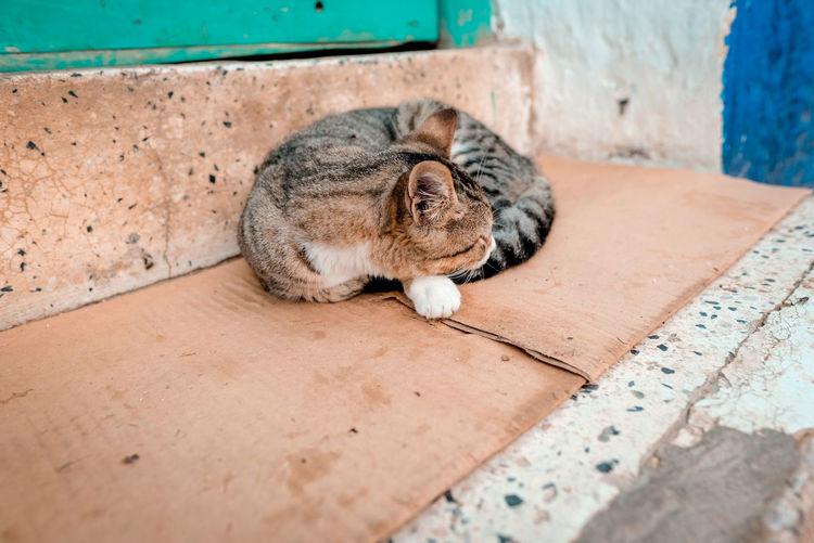 High angle view of cat sleeping on floor