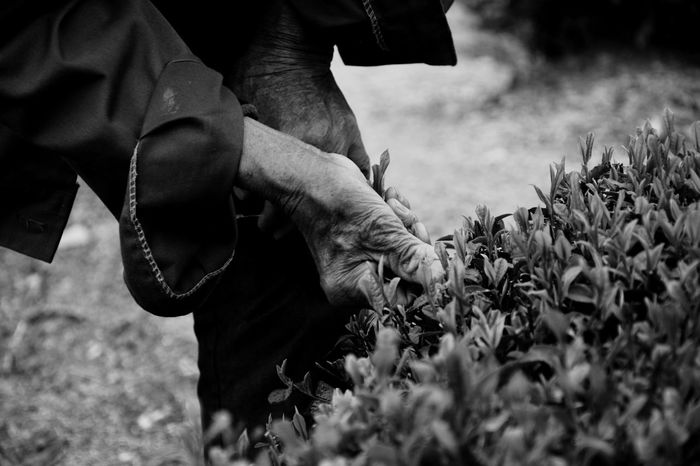 Tea Culture Green Tea Beauty In Nature Good Times Showcase: April Photooftheday Mountaineering Take Photos Photography Spring EyeEm Best Shots Nature On Your Doorstep Enjoying Life Life Hand Bw Black And White Black And White Photography