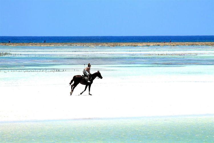 Shirtless Man Riding Horse At Beach Against Clear Sky
