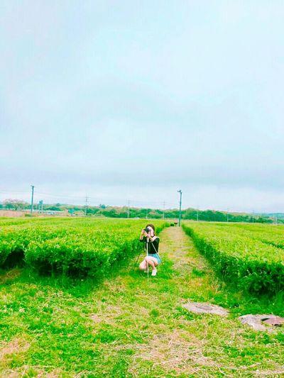 하늘 녹차밭 녹차 푸르른 오설록 Sky Blue Greentea DSLR Photography Southkorea Korea Photography