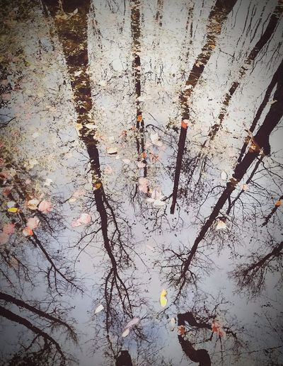 Water Reflection Swamp Nature_collection Woods In The Water Wetlands Sky Clouds Ink Backgrounds Full Frame Abstract Textured  Pattern Drop Close-up Mottled Uneven Fiber Knotted Wood Grooved Abstract Backgrounds