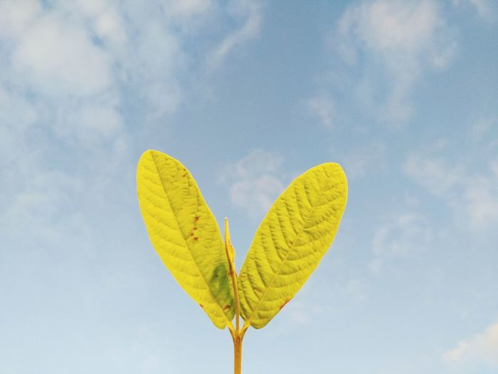 Low angle view of heart shape leaf against sky