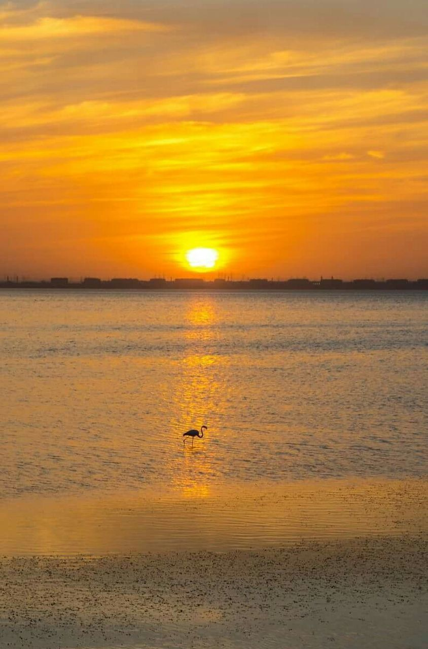 sunset, beauty in nature, nature, animals in the wild, one animal, animal wildlife, scenics, animal themes, reflection, orange color, sea, water, bird, silhouette, outdoors, tranquility, tranquil scene, sun, sky, travel destinations, no people, flamingo, mammal, day