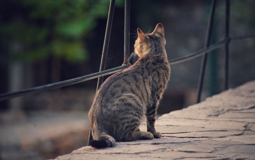 A cat on the bridge Domestic Cat Animal Themes One Animal Mammal Feline Domestic Animals Pets No People Sitting Outdoors Day Nature