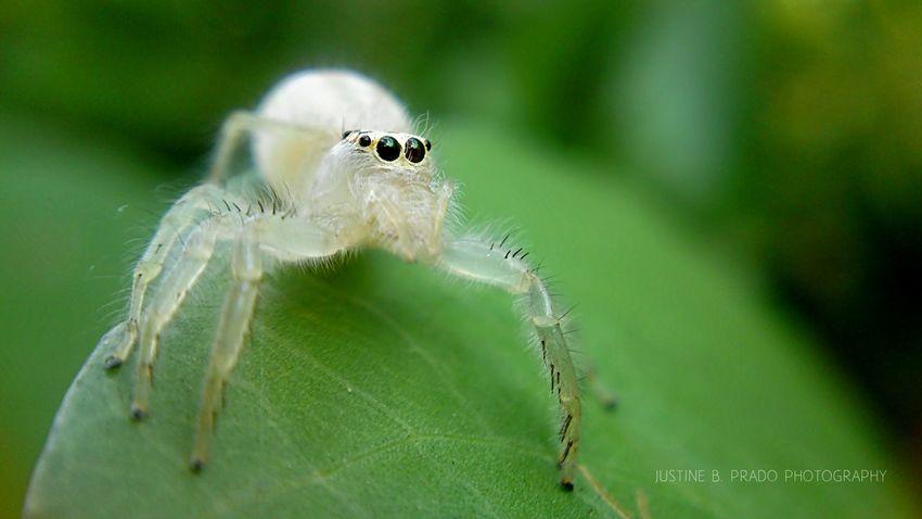 pretty Eyeem Philippines Spiders Mobile Photography Macro Clique