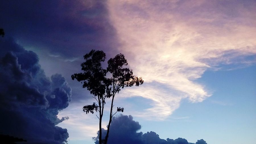 Cielo Nuebes . Nature Cielo Colorido tormenta arbol Beauty In Nature Day