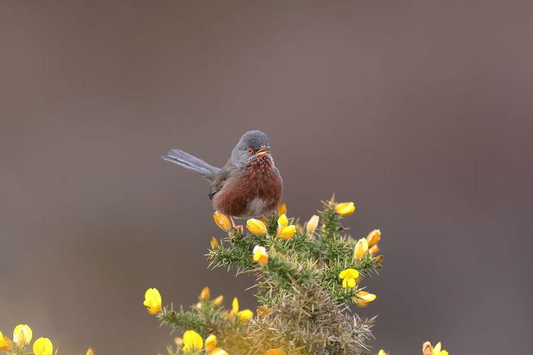 Small bird perching on a flower
