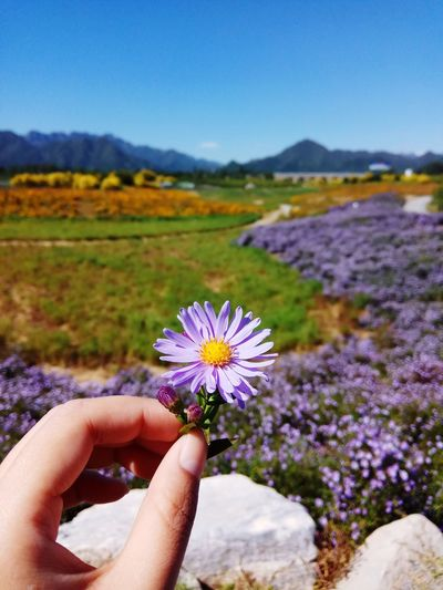 EyeEmNewHere Colors EyeEm Flower Flowering Plant Human Hand Hand Beauty In Nature Plant My Best Travel Photo Nature Sky