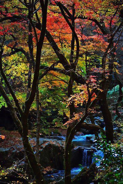 奥山は結構と来てました 麓に降りるのに半月かなぁ😊 EyeEm Nature Lover Leaf Turns Red And Yellow To Take Off Daily Eye4photography  Hagging A Tree IPhoneography Captured By Iphone River View Beautiful Nature The Beauty Of Fall