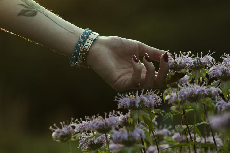 Close-up of hand on purple flowering plant