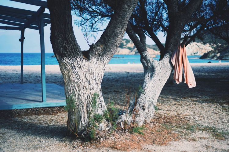 View of trees on beach