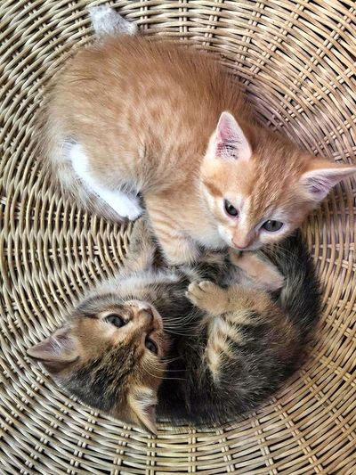 Kittens yin and