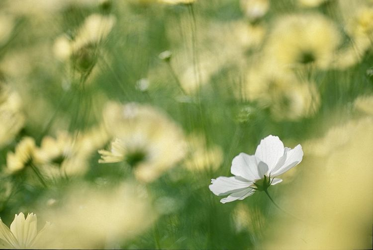 Close-up of white flower blooming outdoors