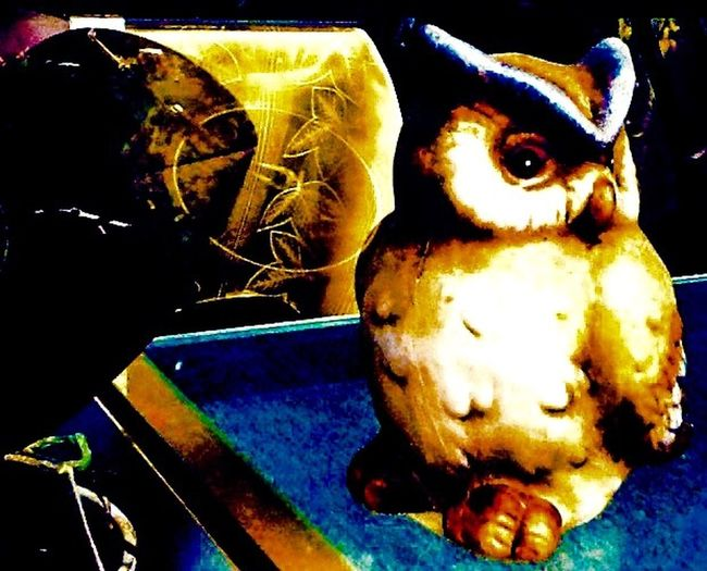 Owl Owls Owl Art Owls Are Cute Owls💕 Owl Photography Store Window Storefront Store Store Display Through The Glass Through The Window Display Store Decor Store Display Fun
