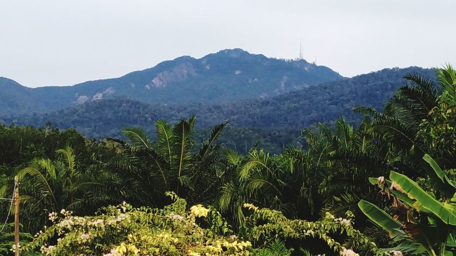 The Top of Mount Ledang Mount Ledang Malaysia Gunung Ledang Simpang Bekoh Montains    Top Of The Mountains Tracking Panorama Cloud - Sky Beauty In Nature Nature Tree Agriculture Landscape Growth No People Mountain Outdoors Rural Scene Scenics Day Sky Plant Beauty In Nature Forest Tea Crop