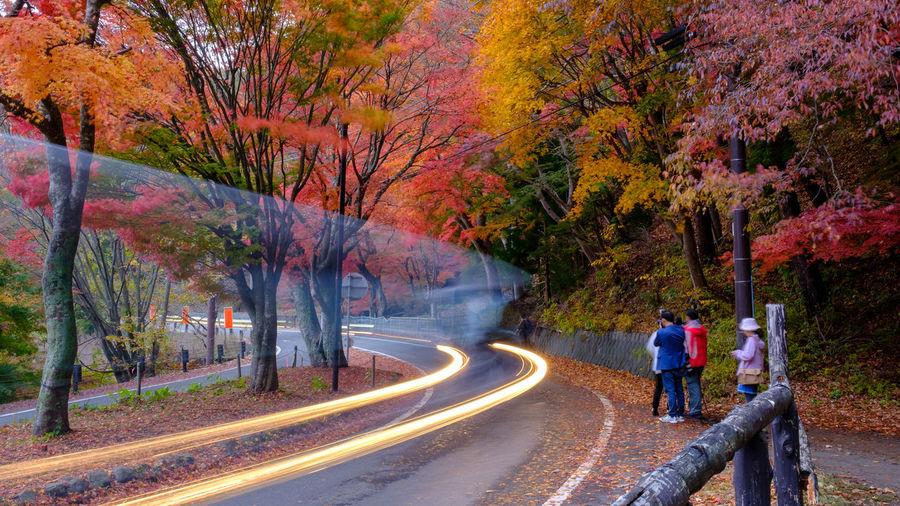 People walking on road in autumn