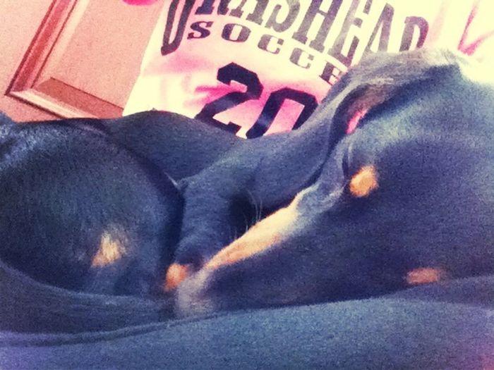 Sleepin On My Lap (: