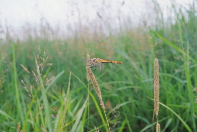Nature Day Focus On Foreground No People Outdoors Beauty In Nature Grass Evening Korea Mountain 황매산 경상남도 대한민국 한국 Forest Nature Sky 등산 Dragonfly Bug Summer
