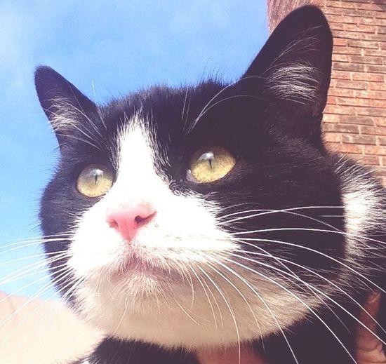Taco ?❤️? EyeEm Nature Lover Cat Watching January 2015 Love Cute Pets Furbaby Catlover Cat♡ I Love My Cat My Cat