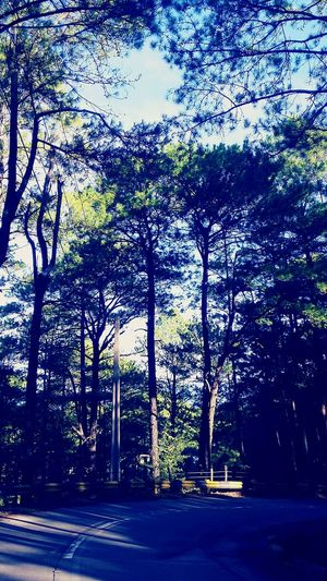 More Fun In The Philippines  Baguio City Summer Capital Pinetrees