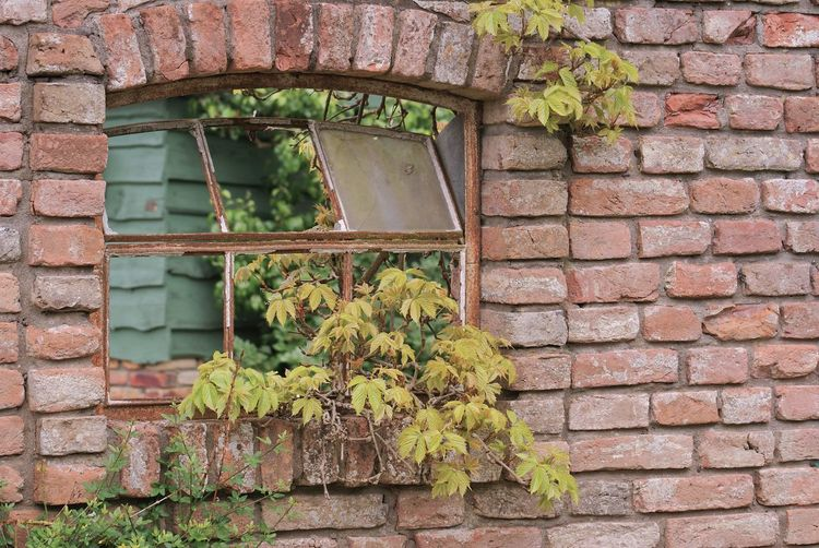 Abandoned Architecture Brick Wall Building Exterior Built Structure Close-up Day Green Color Growth Ivy Leaf Nature No People Outdoors Plant Tuinen Van Appeltern Window