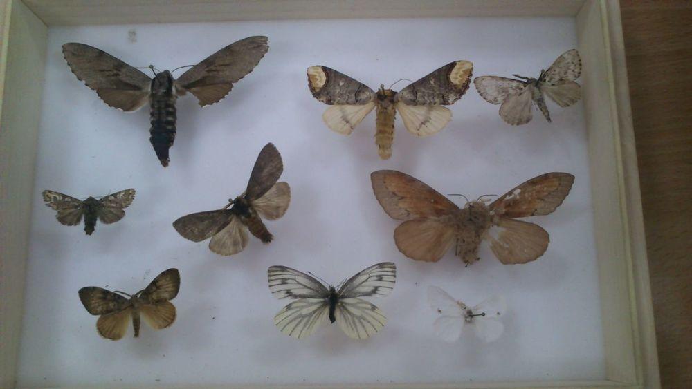 Entomology lesson